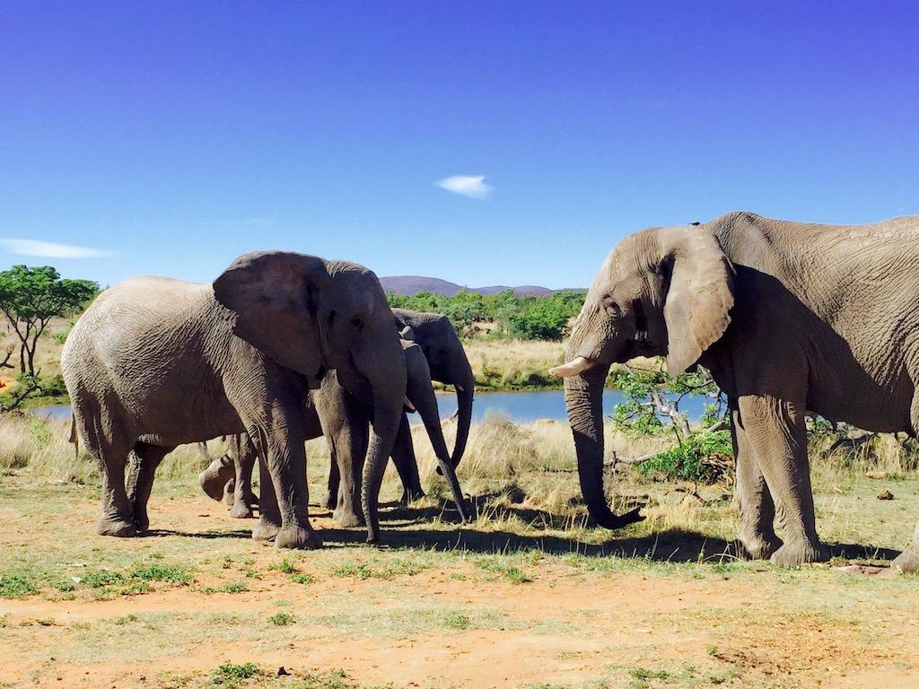 BlakeVonD_SouthAfrica_Safari_04