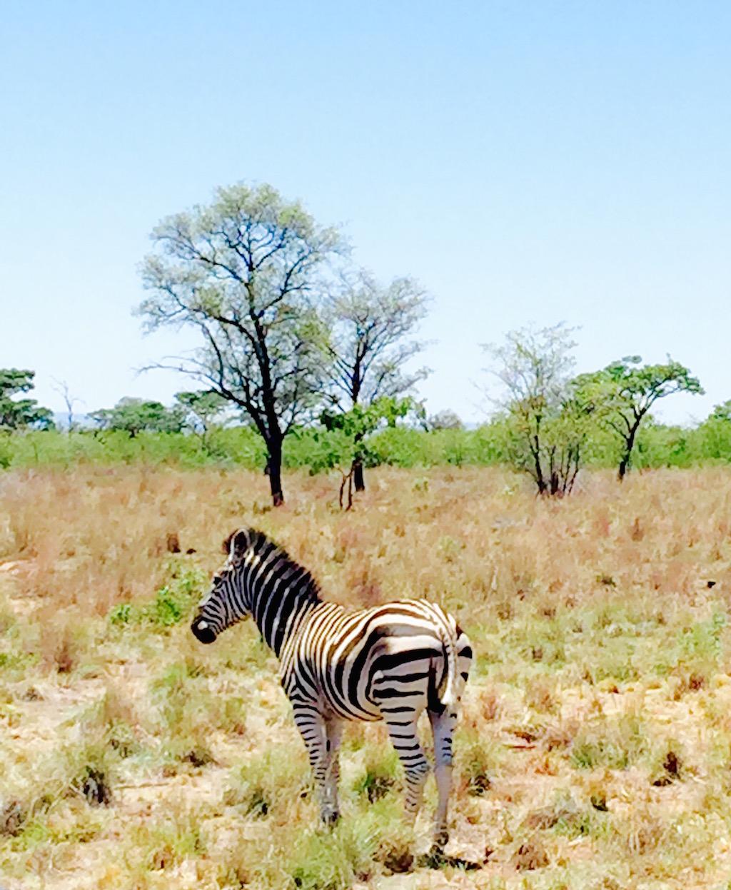 BlakeVonD_SouthAfrica_Safari_07